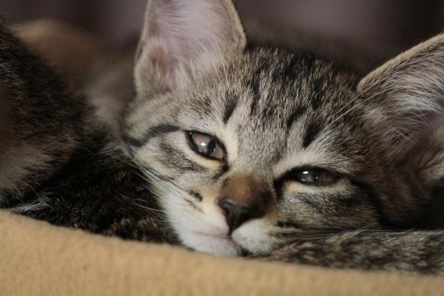 5月病の猫